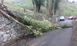 Arbol caído en la carretera de Villarín