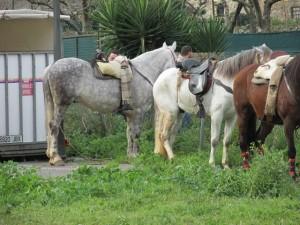 Caballos en la última feria de San Blas en Proaza