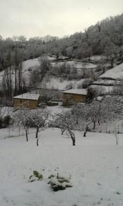 nieve en prado
