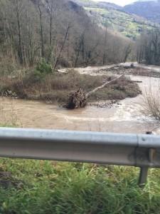 Árboles caídos en el río Pigüeña. Foto de la Asociación de Vecinos
