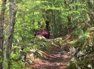 Bosque Presorio
