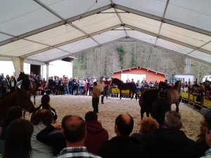 caballos belmonte 1
