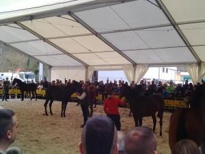 caballos belmonte 2