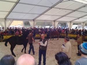 caballos belmonte 4