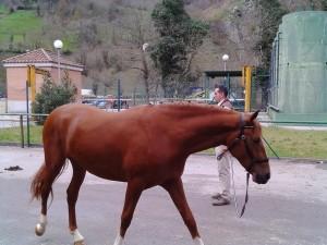 caballos belmonte 5