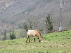 caballos prehistoria