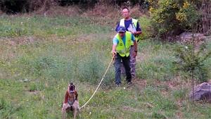 Exhibición de perros en caza de jabalí