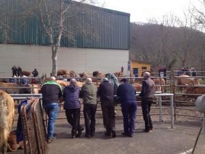 Paisanos observando el ganado