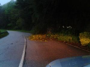 El árbol cortó un carril de la carretera