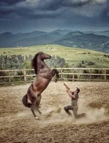 Cartel del espectáculo Bococi Horse Show que se verá en Premoño