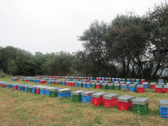 Las colmenas están concentradas en una misma finca / Foto LVT