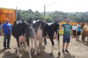las regueras vacas 4