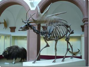 ciervo-gigante