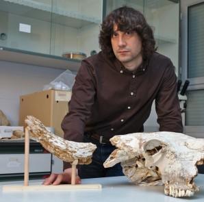 Lao junto al cráneo de un bisonte del pleistoceno / Foto Universidad de Oviedo