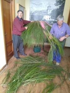 Jubilados voluntarios preparando teitos de escoba para la fiesta prehistórica