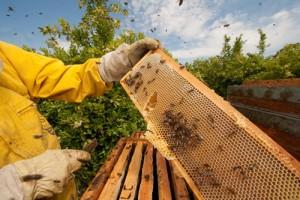 La apicultura, una de las actividades que ha recibido un mayor apoyo